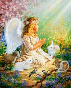 Angel-natura